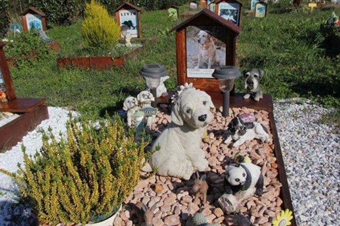 Yorkshire susy cimitero virtuale per animali for Giardino e cani